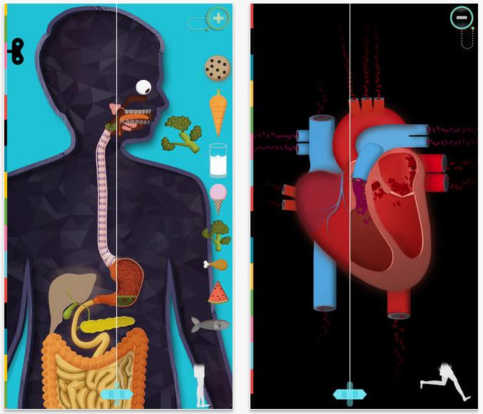 The Human Body: una app preciosa per aprendre anatomia (i en català!)