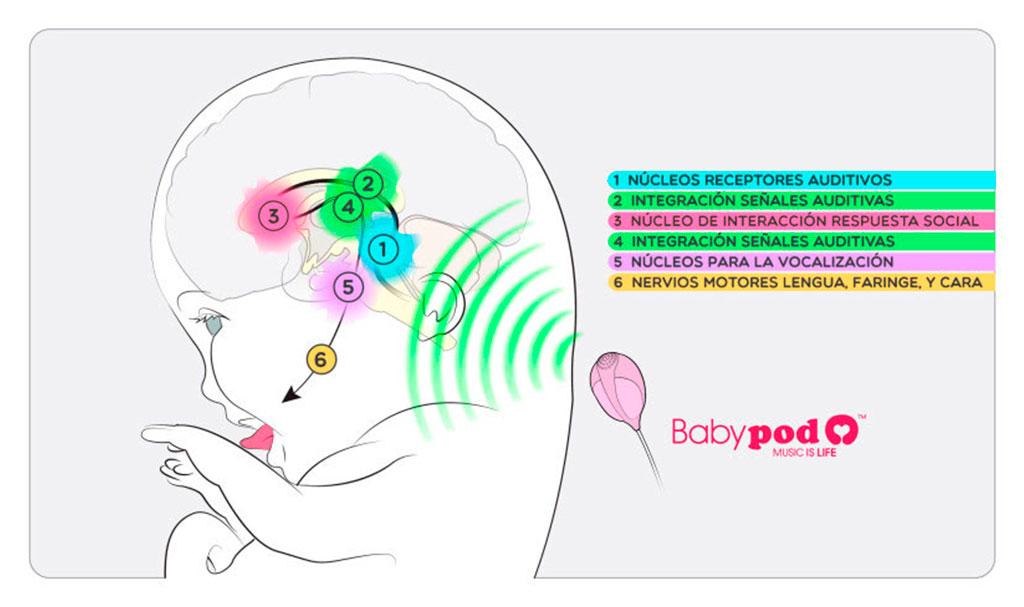 BabyPod Cervell Petits Clicks