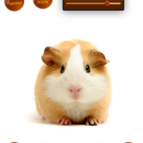 SmackTalk!: una app amb animals que parlen i ens imiten per a riure sense parar